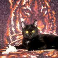 Maria-Alexia-SG — Моё животное
